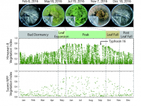 """No """"Clouded"""" Judgments: Geostationary Satellite an Alternative to Monitor Land Surfaces"""